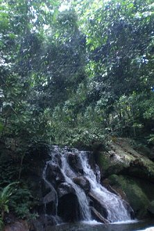 Gunung Kajang's primary forest and water fall